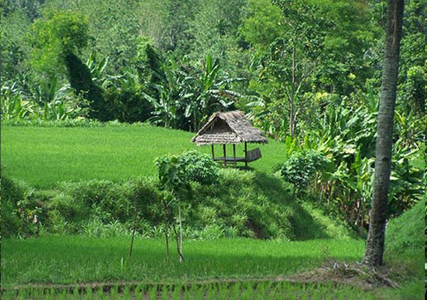 RANDONNÉE rizières